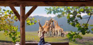 Beekse bergen Safaripark - Noord-Brabant